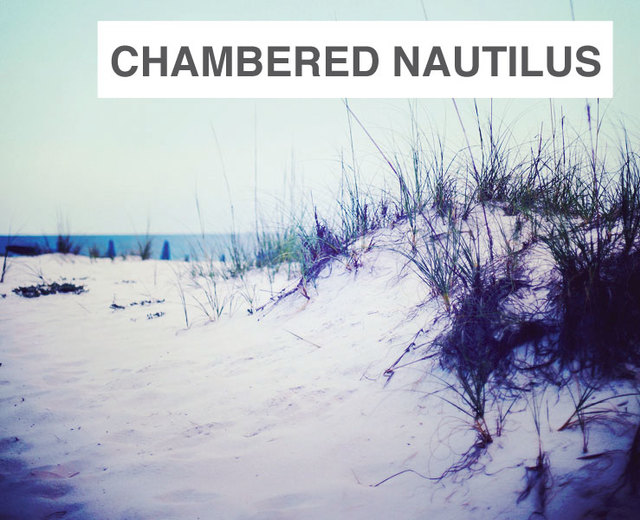 The Chambered Nautilus | The Chambered Nautilus| MusicSpoke