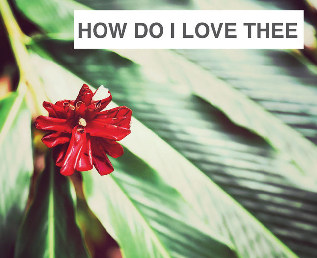 How Do I Love Thee | How Do I Love Thee| MusicSpoke
