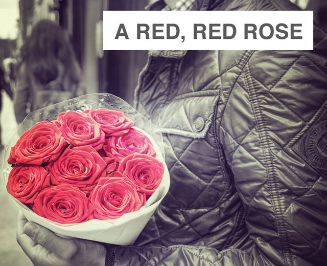 A Red, Red Rose | A Red, Red Rose| MusicSpoke