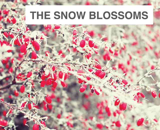 The Snow Blossoms | The Snow Blossoms| MusicSpoke
