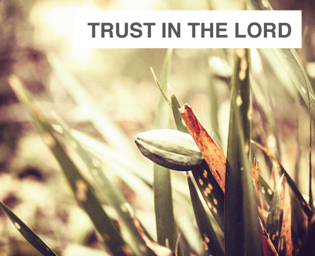 Trust In the Lord | Trust In the Lord| MusicSpoke