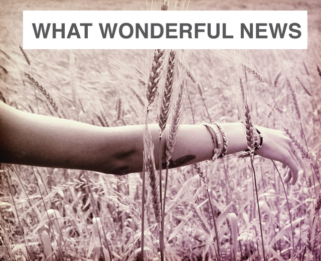Oh, What Wonderful News | Oh, What Wonderful News| MusicSpoke