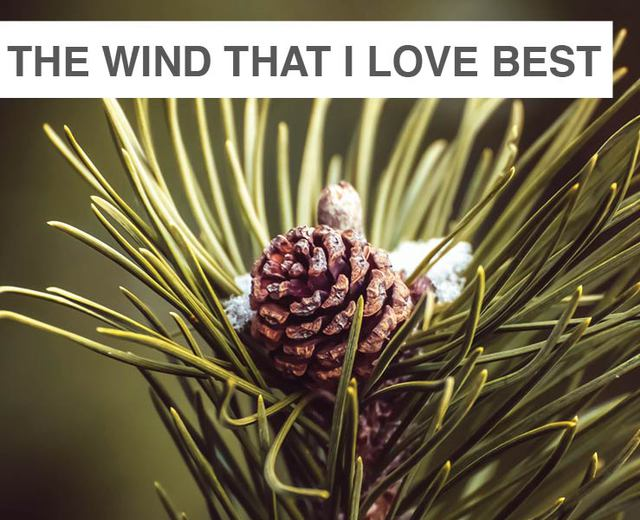 The Wind That I Love the Best | The Wind That I Love the Best| MusicSpoke