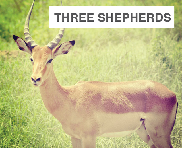 Three Shepherds | Three Shepherds| MusicSpoke